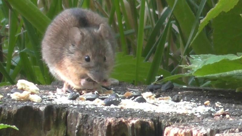 23 мая 2020г мышь