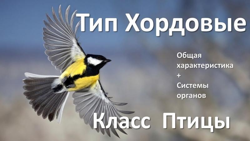 15 1 Птицы часть I 7 класс биология подготовка к ЕГЭ и ОГЭ 2018