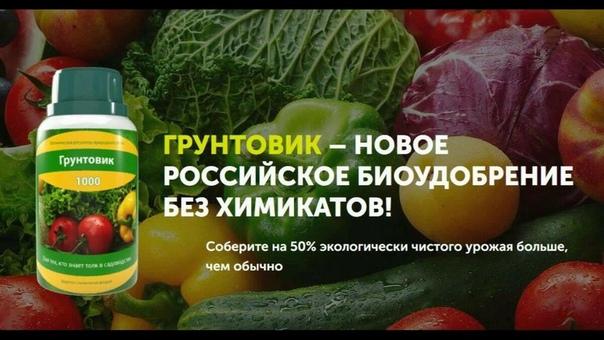 Биоудобрение «Грунтовик», всего за 99 руб. Позволяет увеличить урожайность с дачного участка на 50% всего за 2-3 применения!Подробнее