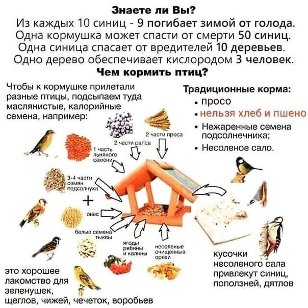 Пooрмите птиц зимой,