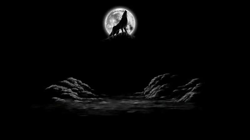 Reignwolf - Wolf River (перевод)