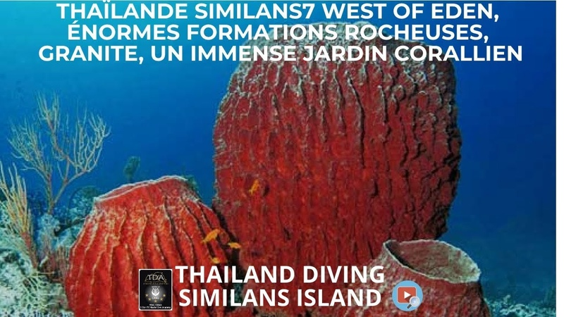 Thaïlande similans7 west of eden énormes formations rocheuses granite un immense jardin corallien