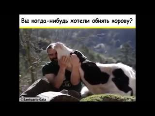 Друзья, не еда. Вы когда-нибудь хотели обнять корову
