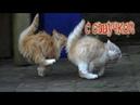 Приколы с котами – СМЕШНЫЕ ЖИВОТНЫЕ С ОЗВУЧКОЙ! ТЕСТ НА ПСИХИКУ - РЖАКА ДО СЛЁЗ!– PSO